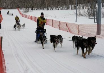 Традиционная камчатская гонка на собачьих упряжках «Берингия-2018»